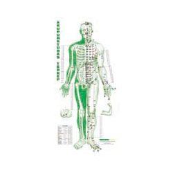 Akupunktúrás térkép